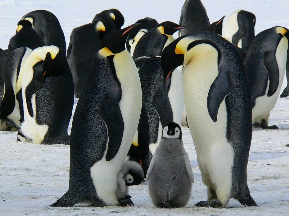 Emperior penguins in Antarctica - an item on my travel bucket list
