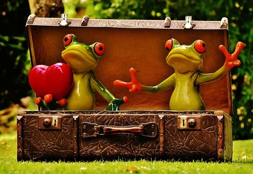Frogs who aren't feeling homesickness while traveling