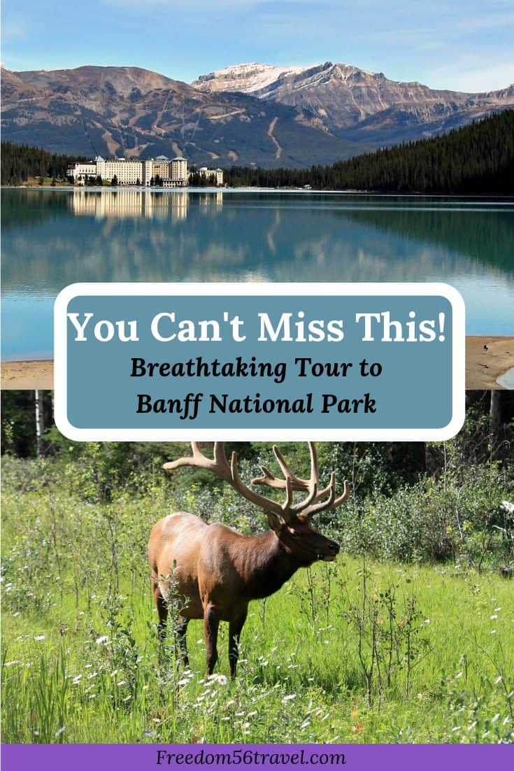 Pinterest Image of Moose and Chateau Lake Louise in beautiful Banff, Alberta
