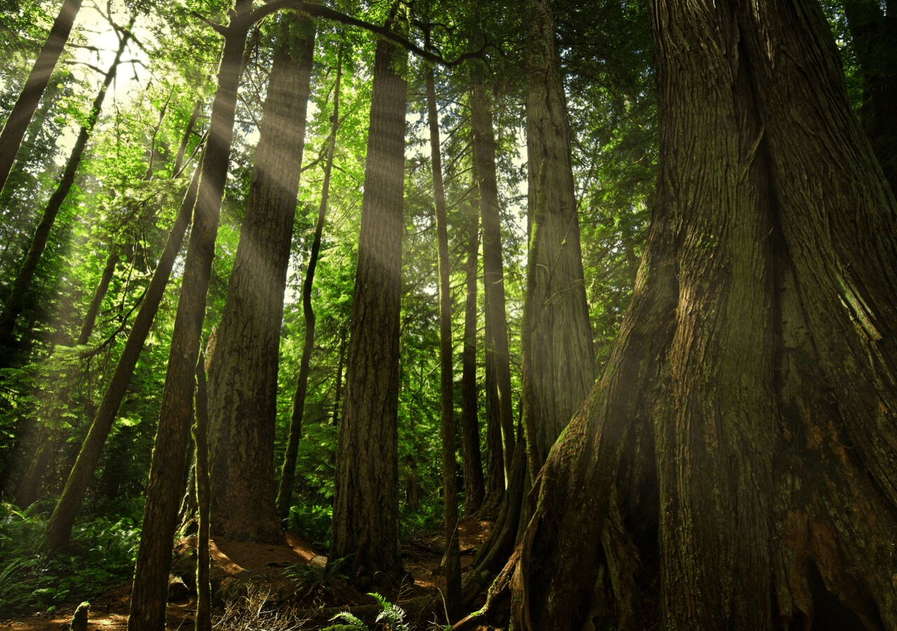 Cathedral Grove, one the way to the rugged west coast of Vancouver Island, one of the cool places on Vancouver Island